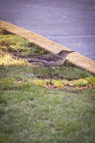 Woodpecker?