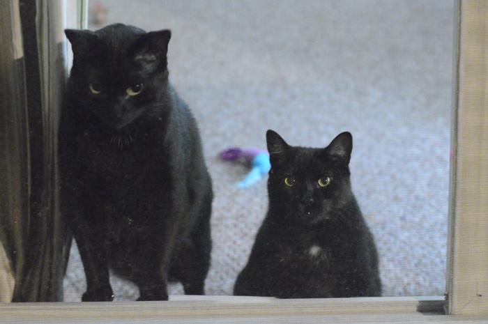 The kitties like them, too!