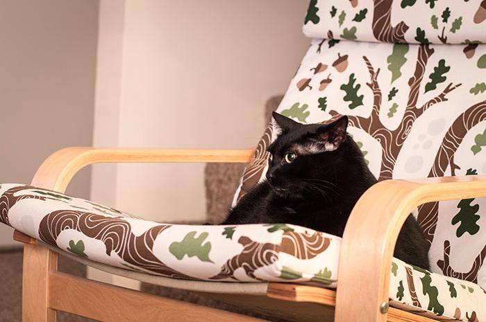 Oscar watching me stitch