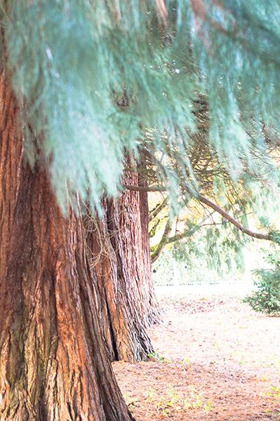 An Emily Carr tree.