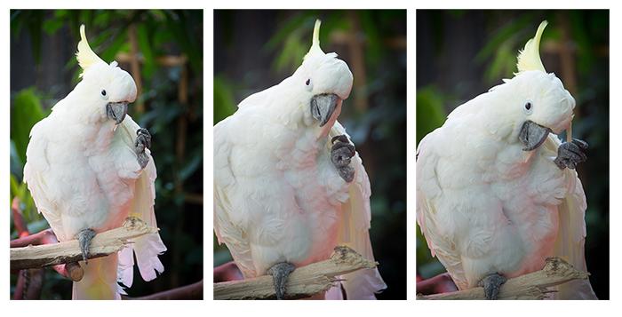 Birdie num num!