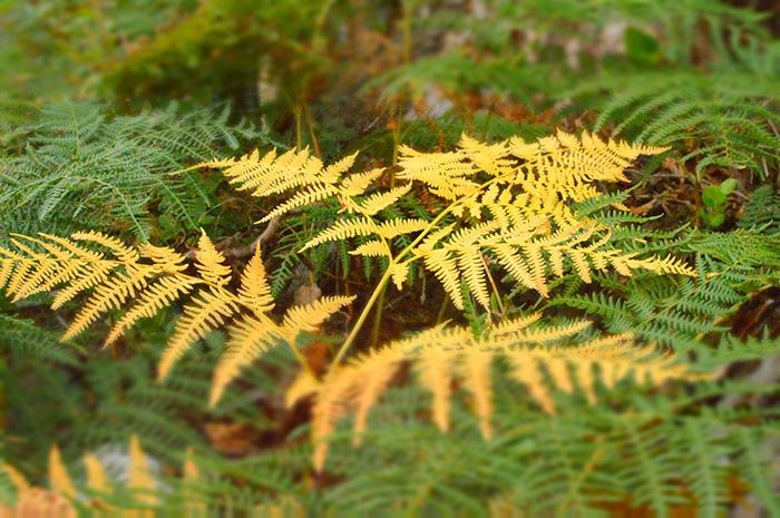 A Fall Fern