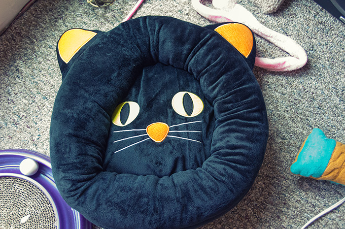 Yes. We needed the black cat bed.