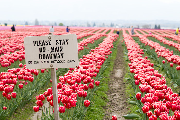 Please stay on the walkway