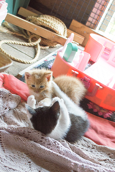 Kitty wrestling!