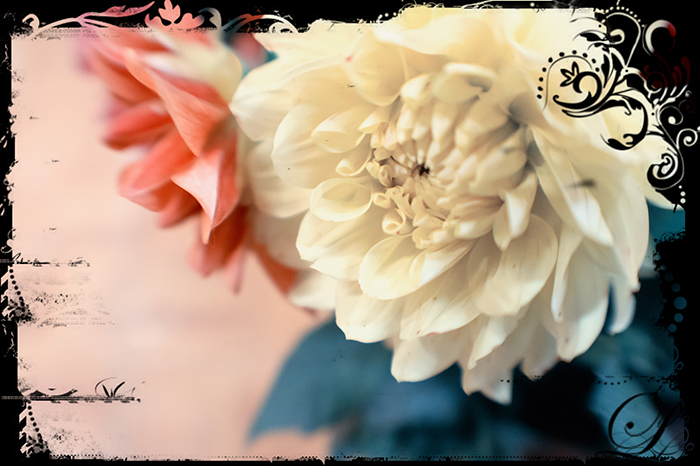 Last month's flowers