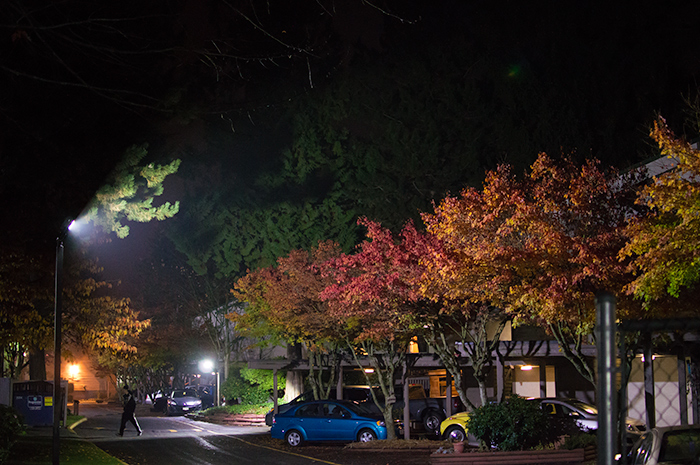 Fall leaves at night.